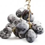 Виноград как перекус